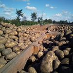 Kartoffeln von Bauer Todt